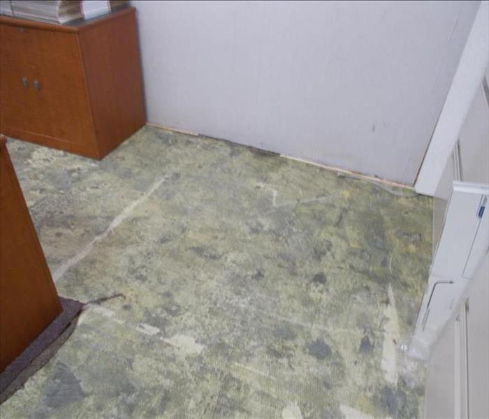 Mold Remediation  Does Your Morgantown Home Have A Mold Problem?