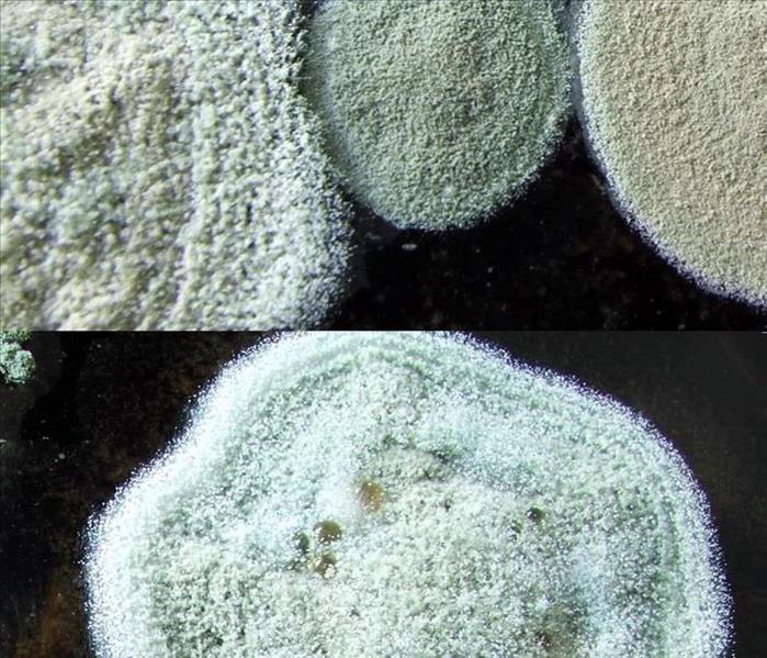 A picture of samples of different types of mold that can be found in your home.